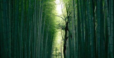 bambu en la construccion