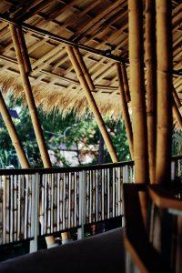 bambu para consutrcción